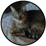Matilda the Shop Cat